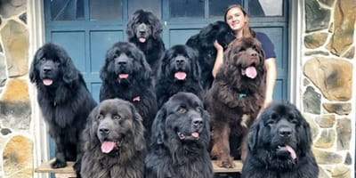 Woman takes her nine dogs with her to cheer up hospital patients
