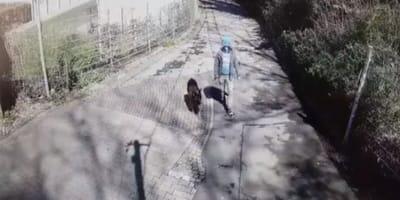 Monitoring nagrywa właściciela z psem. To, co robi opiekun ze zwierzakiem, łamie serce