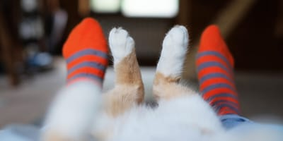 gatos calcetines blancos