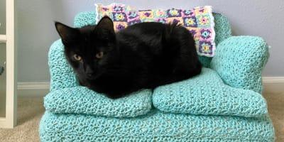 Nudzisz się podczas kwarantanny? Zrób swojemu kociakowi na szydełku uroczą sofę