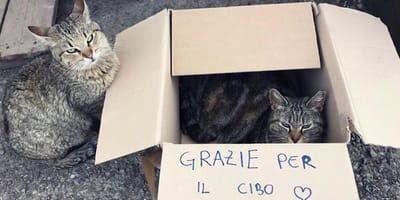 gatti in uno scatolone