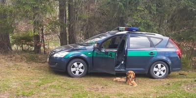 Pies w straży granicznej.