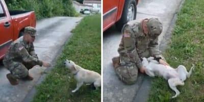 Pies wita opiekuna w mundurze.
