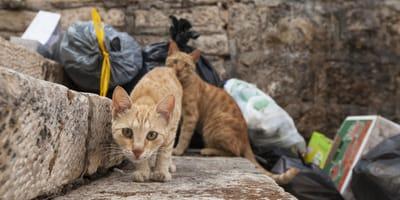 gatos bolsas basura