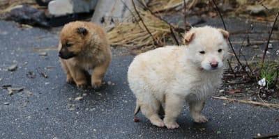 cachorros calle