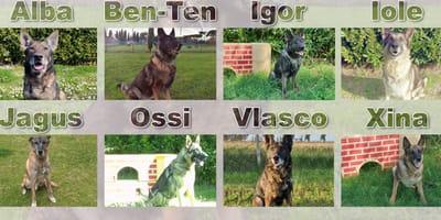 Chi vuole adottare un cane militare? L'appello dell'Esercito Italiano