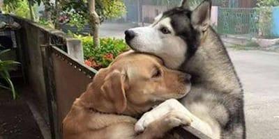 dwa psy się przytulają