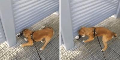 amor perro cuarentena pamplona