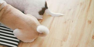 Perché i cani scodinzolano? I significati dei movimenti della coda