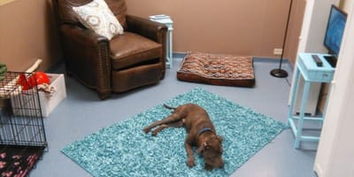 The new room is helping dogs find their forever