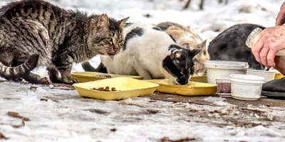 stray cats being fed in the streets
