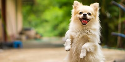 How to improve your dog's digestion with probiotics