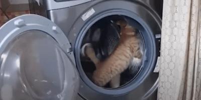 Ten kot znalazł idealny sposób na nudę w czasie kwarantanny (VIDEO)