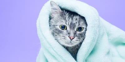 al bañar a esta gatita se dieorn cuenta de que necesitaba una cirugia