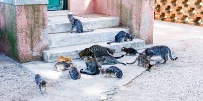 gatos ferales en la calle