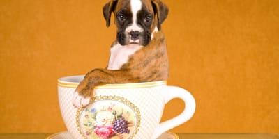 perro en una taza