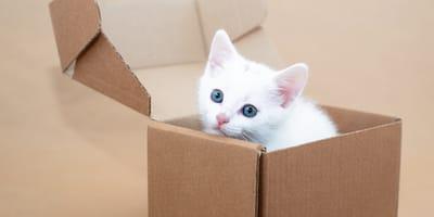 Los 180 nombres para gatos blancos más originales