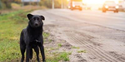 perro carretera