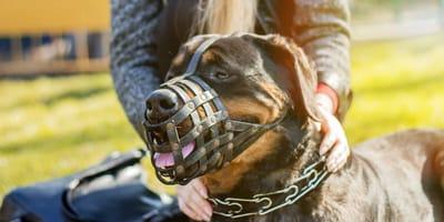 razas de perros con bozal obligatorio