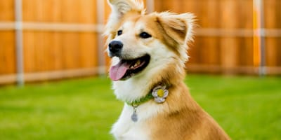 Cane con disturbi intestinali gioca felice in giardino