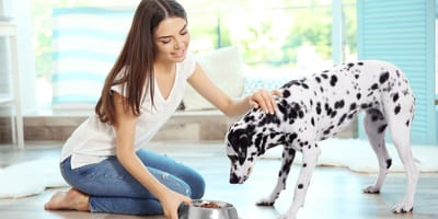Padrona dà da mangiare al suo Dalmata