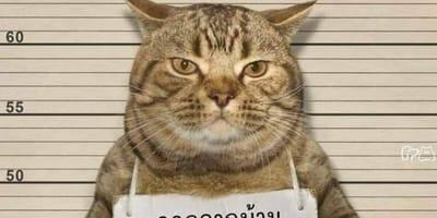 gatto_foto-segnaletica