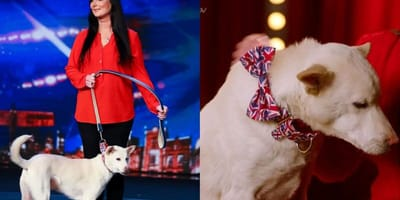 Dog on Britain's Got Talent show