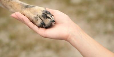 Rescatando a un perro