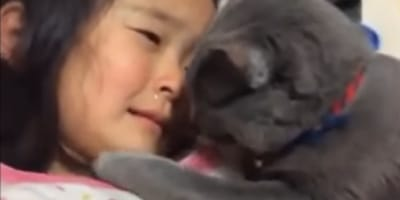 grey cat close to young girl's face
