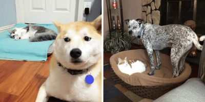 cama perro grande