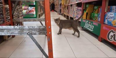 gato mercado