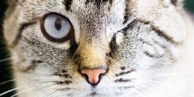 Rodzina adoptuje kota podczas epidemii: 3 godziny później wolontariuszy ogarnia wściekłość