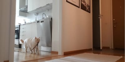 Deja la cámara grabando cuando el gato se queda solo: al ver el video se le derrite el corazón