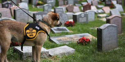 A dog watches over a fallen comrade at a pet cemetery in the US