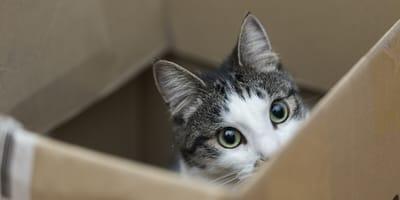 Come realizzare degli accessori per gatti fai da te?