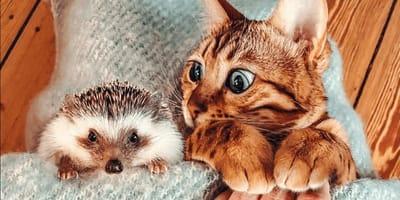 <p>Herbee i Audree są nierozłączni w każdej sytuacji!</p>