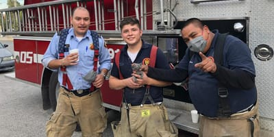 bomberos rescatan gato en ciudad juarez