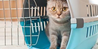 Transportín para tu gato: 5 consejos para comprar el mejor