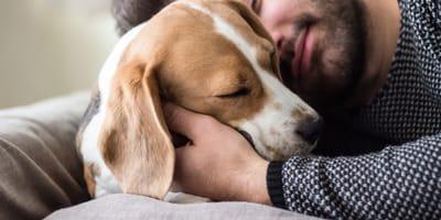 Owner holding its beagle dog