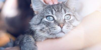 ¿Cuántos años vive un gato? Esperanza de vida según su raza y características