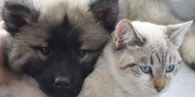cane e gatto in primo piano