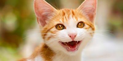 primo piano di gatto con flatulenza