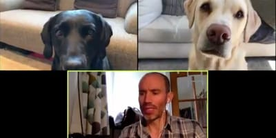 Man holds business meeting with dogs and breaks the internet