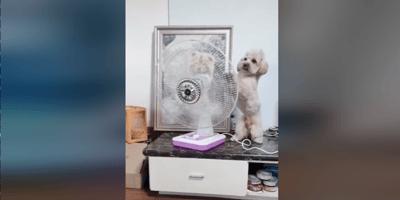 Perro y ventilador