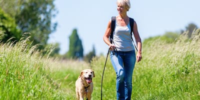 woman walking her labrador in countryside