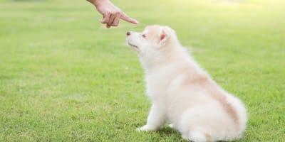 cachorro recibe la orden de quedarse quieto