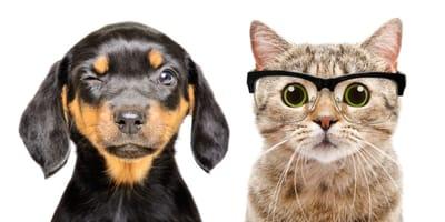 perro y gato con cara de pregunta