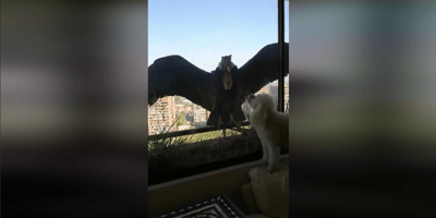cóndor en la ventana