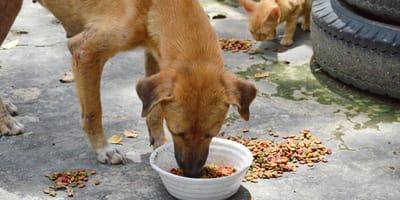 perro gato alimento