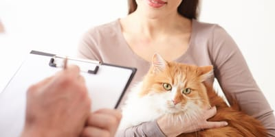 Ginger cat at the vet with owner